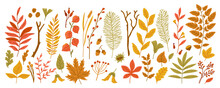 Autumn Leaves. Yellow Garden Leaf, Red Fall Leaf And Fallen Dry Leaves Isolated On White. Botanical Forest Plants Or September And October Tree Foliage. Flat Branches With Berries, Acorns, Cones