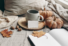 Cozy Autumn Morning Breakfast Still Life. Cup Of Hot Coffee, Tea Son Wooden Plate Near Window. Blank Business Card Mockup. Fall, Thanksgiving Concept. Orange Pumpkins, Acorns And Maple Leaves.