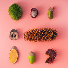 Autumn Natural Materials - Cone, Moss, Chestnut, Acorn, Sawn Wood, Walnut Shell - In The Form Of A Square, Conceptual Flatley On A Pink Background