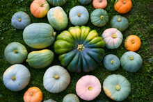 Unprecedented Autumn Harvest Of Cut Large Ripe Appetizing Healthy Beautiful Colorful Zucchini And Pumpkins Of Different Varieties And Shapes, Grown In The Garden, Lying On Green Grass
