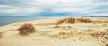 Sand Dunes Of The Curonian Spit, Overgrown With Bushes, On The Shore Of The Curonian Bay
