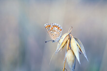 A Beautiful Butterfly Sits And Gets Wet On Rainy Days
