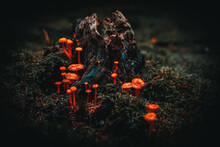Selective Focus Shot Of Mushrooms Growing On The Cut Tree Trunk Covered With Moss In The Forest
