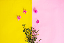 Pink And Yellow Paper Texture Background, Green Plants And Flowers Madagascar Periwinkle