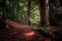 Path Surrounded By Tall Trees And Plants In Bavarian Forest
