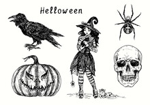 Halloween Collection, Black Crow, Pumpkin Jack-o-lantern, Cute Small Witch In Hat Holding Black Cat, Spider And Scull. Ink Black And White Drawing