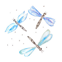 Vector Hand Drawn Watercolor Set Of Dragonfly
