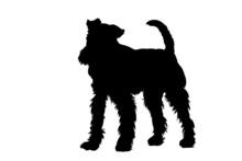 Fox Terrier, Wire Hair, In Black Shadow Pattern On White Background.