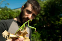Young Bearded Man Holding A Praying Mantis On A Litter Of Corn. Selective Focus.