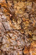 Weathered Tree Bark Texture