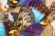 Background Of Insect Wing Collection