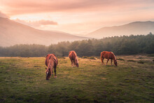 Horses Grazing In Field Against Mountains In Sunlight