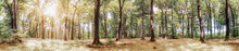 Panorama Of A Picturesque Fairytale Forest In The Light Of The Bright Summer Sun