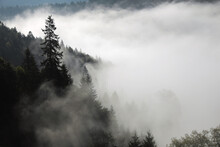 Picturesque View Of Foggy Forest. Beautiful Mountain Landscape