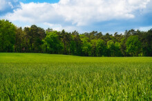 Mesmerizing Green Field With High Dense Trees Under A Cloudy Sky