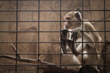 Monkey In Cage At The Animal Shelter