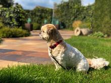 Dog Spotting Something