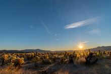 Scenic View Of The Cholla Cactus Garden In Joshua Tree National Park, California At Sunrise