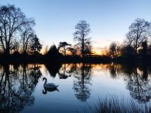Birds Swan On Lake Against Sky During Sunset