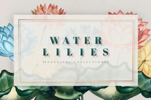 Colorful Botanical Water Lilies Frame Vector