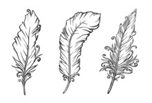 Set Of Feathers Drawing On White. Vector Illustration