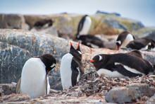 Selective Focus Shot Of Adorable Penguins Having Rest On The Rocks
