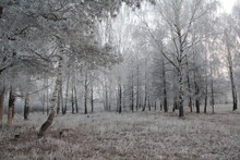 First Snow And Frosty Night In The Forest