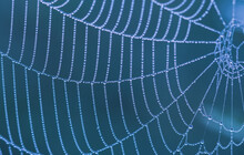 Fragment Of A Cobweb With Dew Drops In Blue Tones. Shallow Depth Of Field.
