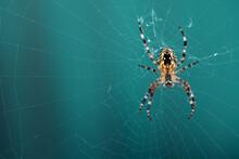 Spinne Hängend Am Spinnennetz