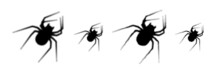 Set Of Black Halftone Spider Silhouette.