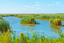 Inlet Of An Island Wetland Nature Reserve With Wild Flowers, Cattail And Reed Along A Lake Below A Bright Blue Sky In Summer, Marker Wadden, Lelystad, Flevoland, Netherlands, September 20, 2021