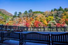 紅の吊橋の紅葉