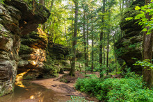 Lush Forest At Hocking Hills State Park In Ohio