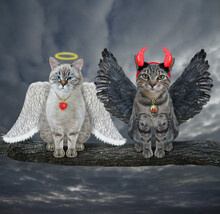 An Ash Cat Angel And A Gray Cat Devil Are Sitting On A Log Together. Sky Cloud Background.