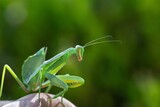 Fototapeta Kawa jest smaczna - European black bug on wooden tree and green background