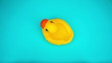 Duck On Blue