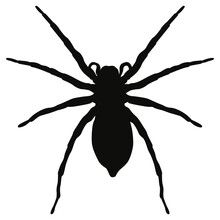 Black Isolated Spider. Vector Halloween Spider Shadow.
