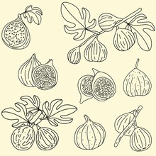 Doodle Freehand Sketch Drawing Of Fig Fruit.