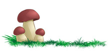 Forest Mushrooms With A Green Grass.
