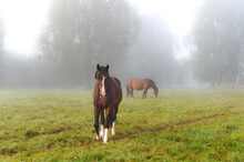 Two Horses Graze In The Meadow
