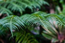 Fern Leaf In Tropical Garden