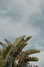 Palm Tree Leaves Against A Summer Sky.