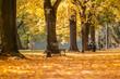 Złota jesień - Park miejski w Zamościu