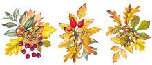 Set Of Autumn Bouquets With Colorful Leaves And Berries. Watercolor Isolated On White.