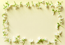 Spring Background With Green Plants And White Flowers On A Light Paper Background. Contrast And Minimalism Concept.