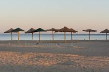 Seagulls And Albatrosses Walk Along The Evening Beach Among Beach Umbrellas