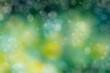 canvas print picture - abstracta de luces desenfocadas entre los arboles del bosque