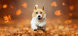 Funny happy cute smiling pet dog puppy running in the leaves. Orange red autumn fall banner.