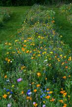"""22-09-2021- Denmark-Aarhus. Beautiful Zinnia """"Seed Hat"""" On A Danish Flower Field"""