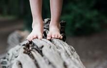 Child's Feet Walking Along A Fallen Tree In The Forest